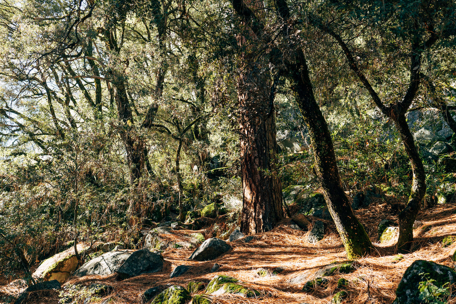 photographer-yosemite-usa-california-047